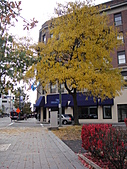 20101023 Nazareth College, Pittsford NY USA:DSC04639.JPG