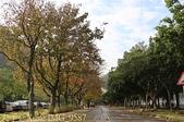 2014楓石門 野餐日 (桃園石門水庫 南苑公園) 2014/12/13:IMG_9587.jpg