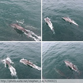 宜蘭烏石港賞海豚 2013/07/20:相簿封面