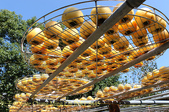 金漢杮餅教育農園 20151017:IMG_8445.jpg