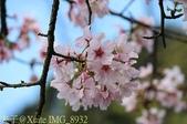 新北市三芝群櫻紛飛漫步行 - 三生步道 20140228 :IMG_8932.jpg