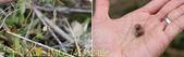 2015上山採藥趣 山藥高峰會 - 雙溪老街遊 (平林休閒農場)  20151003:IMG_745352-tile.jpg