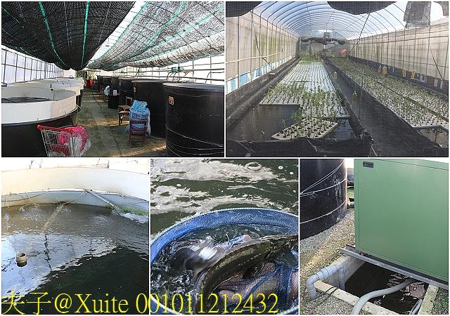 001011212432.jpg - 大溪魚菜共生坊 2019/09/12