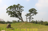 大漢溪山豬湖生態親水園區 20181107:IMG_9250 星空草原.jpg
