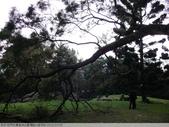 石門水庫溪洲公園 楓紅+落羽松 2011/12/28 :P1030304.jpg