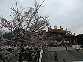 淡水無極天元宮, 櫻花開了!  2011/03/08 17:00 天氣: 陰:P1010396.JPG