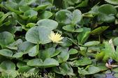 桃園市八德埤塘自然生態公園 20150501:IMG_8423.jpg