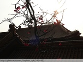 桃園虎頭山桃園高中櫻花開了! 2012/02/06:P1040980.jpg