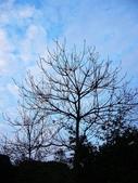 2012/02/20 回暖的傍晚:P1110150.jpg