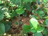 紅火蟻:IMG_2773.jpg