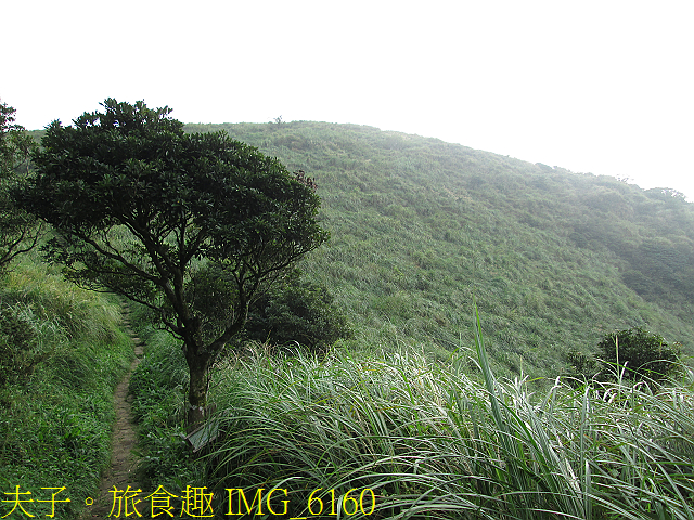 IMG_6160.jpg - 陽明山國家公園 面天山 - 向天山步道 向天池、向天山、面天山 20200916
