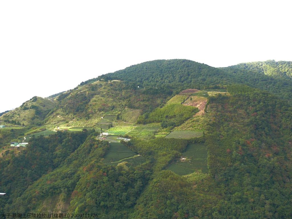 桃園上巴陵拉拉山 (達觀山) 2009/11/26 :P1050523.JPG
