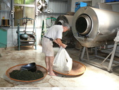 翠玉烏龍茶製作 3 - 揉捻成型 :P1090995.JPG