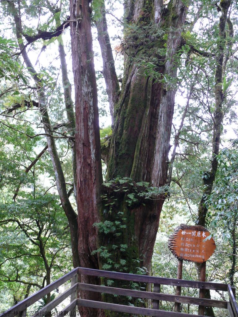 桃園上巴陵拉拉山 (達觀山) 2009/11/26 :P1050591.JPG