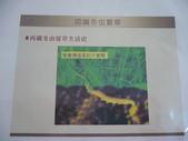 冬蟲夏草之偶見 2011/10/10 於台北三峽遠雄社區:P1090250.JPG