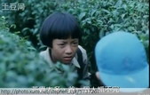 茶園害蟲 - 布袋蟲.避債蟲.躲債蟲 2012/06/07:魯冰花電影-1.jpg