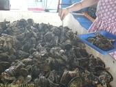 澎湖海上牧場炭烤牡蠣吃到飽, 不用鉤子釣海鱺 2012/08/17:P1120055.jpg