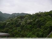 土城承天禪寺 and 桐花公園螢火蟲 20100429:P1070769.JPG