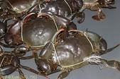 澳洲 Catch-A-Crab 黃金海岸翠德 (Tweed) 河捕蟹探險之旅 2013/02/07:IMG_7563.jpg