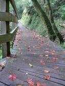 桃園上巴陵拉拉山 (達觀山) 2009/11/26 :P1050574.JPG