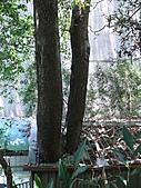 桃園龜山楓樹村百年楓香-楓樹路下土地公廟 2010/08/20:P1090227.JPG