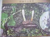 冬蟲夏草之偶見 2011/10/10 於台北三峽遠雄社區:P1090253.JPG