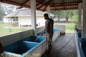 泰國攀牙海龜生態保育中心 20160207:IMG_5660.jpg