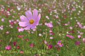 新北市淡水區屯山里荷花田 2015/06/04:IMG_3307.jpg