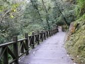 桃園上巴陵拉拉山 (達觀山) 2009/11/26 :P1050538.JPG