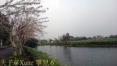台南白河將軍埤 南洋櫻廊道 20180330:6.jpg