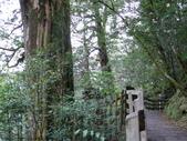 桃園上巴陵拉拉山 (達觀山) 2009/11/26 :P1050559.JPG