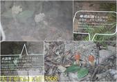 桃園復興 巴陵古道生態園區 20190330:6213568.jpg