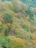 石門水庫楓葉紅了 2011/11/28:P1030141.jpg