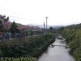新北市三芝群櫻紛飛漫步行 - 三生步道 20140228 :P1030298.jpg
