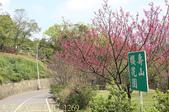 桃園龜山嶺頂壽山巖觀音寺 賞櫻花 20170312:IMG_1269.jpg