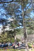 2021年 武陵農場 山櫻花、紅粉佳人 繽紛綻放 20210214:IMG_4612.jpg