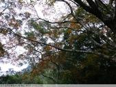 石門水庫溪洲公園 楓紅+落羽松 2011/12/28 :P1030309.jpg