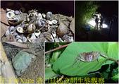 屏東滿州鄉港口社區 20180831:港口社區夜間生態觀察.jpg