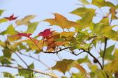 台中市秋紅谷廣場 (秋紅谷生態公園) 2015/03/15:IMG_4996.jpg