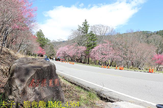 2021年 武陵農場 山櫻花、紅粉佳人 繽紛綻放 20210214:IMG_4364.jpg