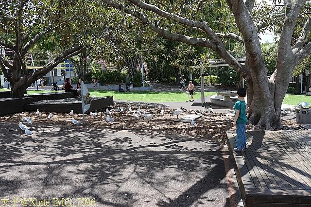澳洲布里斯本-南岸公園 South Bank Parklands 2013/02/06:IMG_7096.jpg