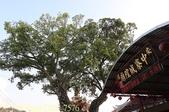 嘉義鹿草中寮安溪城隍廟盤天樹 2013/08/11:IMG_7576.jpg