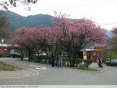 汐止大尖山天秀宮櫻花 2011/03/14:P1010603.JPG