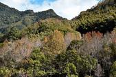 軍艦岩吊橋,尖石鄉秀巒全新景點 (秀巒道路 5K處)。 20160107:CHU_1565.jpg