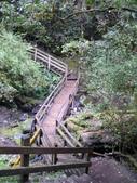 桃園上巴陵拉拉山 (達觀山) 2009/11/26 :P1050575.JPG