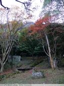 石門水庫溪洲公園 楓紅+落羽松 2011/12/28 :P1030302.jpg