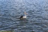 澳洲 Catch-A-Crab 黃金海岸翠德 (Tweed) 河捕蟹探險之旅 2013/02/07:IMG_7567.jpg