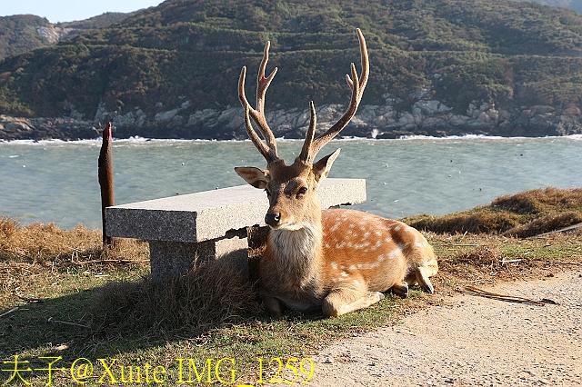 IMG_1259.jpg - 可愛的梅花鹿在大坵島等你 20171021