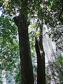 桃園龜山楓樹村百年楓香-楓樹路下土地公廟 2010/08/20:P1090229.JPG
