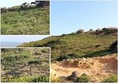 可愛的梅花鹿在大坵島等你 20171021:12141516.jpg